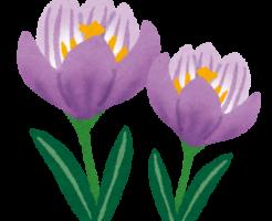flower_crocus