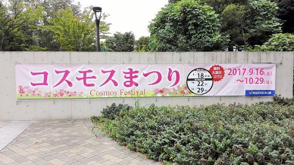 昭和記念公園 コスモス