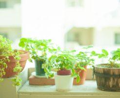 風水 玄関 観葉植物 種類